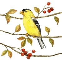 Birds & Berries II Fine Art Print