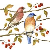 Birds & Berries IV Fine Art Print