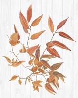 Sweet Foliage I Framed Print