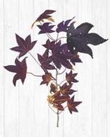Sweet Foliage II Framed Print