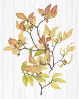 Sweet Foliage III Framed Print