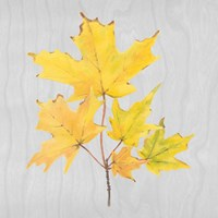 Autumn Leaves II Fine Art Print