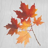 Autumn Leaves IV Fine Art Print
