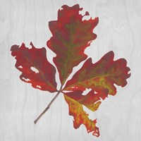Autumn Leaves V Fine Art Print