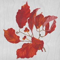 Autumn Leaves VI Fine Art Print
