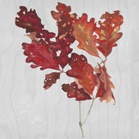 Autumn Leaves VIII Fine Art Print