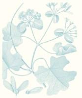 Botanical Study in Spa II Framed Print