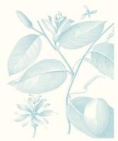 Botanical Study in Spa III Framed Print