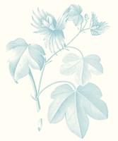 Botanical Study in Spa IV Framed Print