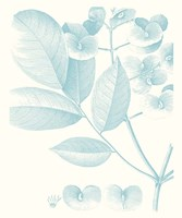 Botanical Study in Spa V Framed Print