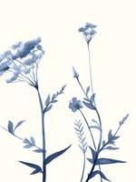Indigo Wildflowers I Framed Print