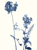 Indigo Wildflowers V Fine Art Print