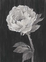 Black and White Flowers II Fine Art Print