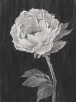Black and White Flowers II Framed Print