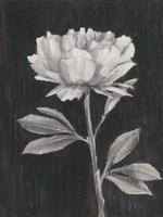 Black and White Flowers III Framed Print