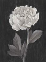 Black and White Flowers IV Framed Print