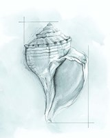 Coastal Shell Schematic I Fine Art Print