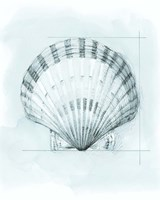 Coastal Shell Schematic III Fine Art Print