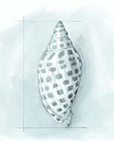 Coastal Shell Schematic IV Framed Print