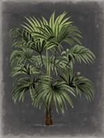 Dramatic Palm I Framed Print