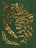 Gilded Ferns I Framed Print