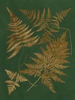 Gilded Ferns II Framed Print