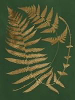 Gilded Ferns IV Framed Print