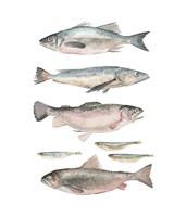 Fish Composition I Framed Print