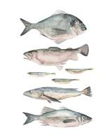 Fish Composition II Framed Print