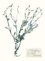 Pressed Flowers in Spa II Framed Print