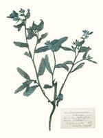 Pressed Flowers in Spa III Framed Print