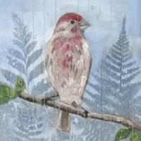 Eastern Songbird I Framed Print