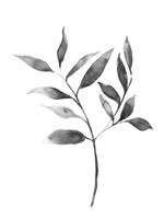 Brume Botanical II Framed Print