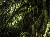 Mossy Tempered Forest Fine Art Print