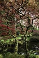 Japanese Garden Tree Fine Art Print