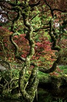 Japanese Garden Tree 2 Fine Art Print
