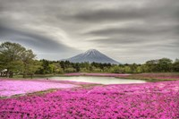 Mount Fuji Pink Moss Fine Art Print