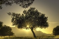 Sunburst Through a Tree Los Angeles Fine Art Print