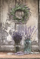 Cutting Lavender Fine Art Print