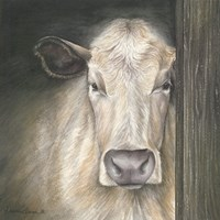 Farm Animal - Cow Fine Art Print