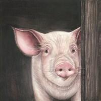 Farm Animal - Pig Fine Art Print