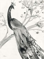 Majestic Peacock Fine Art Print
