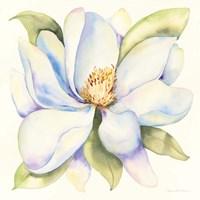 Magnolia Fine Art Print