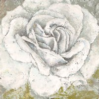 White Rose Blossom Square Fine Art Print