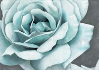 Rose Bloom Fine Art Print