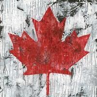 Canada Maple Leaf I Fine Art Print