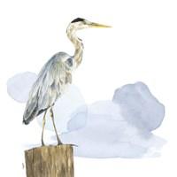 Birds of the Coast on White I Framed Print