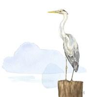 Birds of the Coast on White II Framed Print