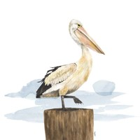 Birds of the Coast on White III Framed Print