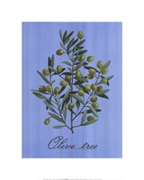 "Olive Tree by Thilly - 16"" x 20"""
